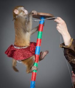 дрессированные обезьянки