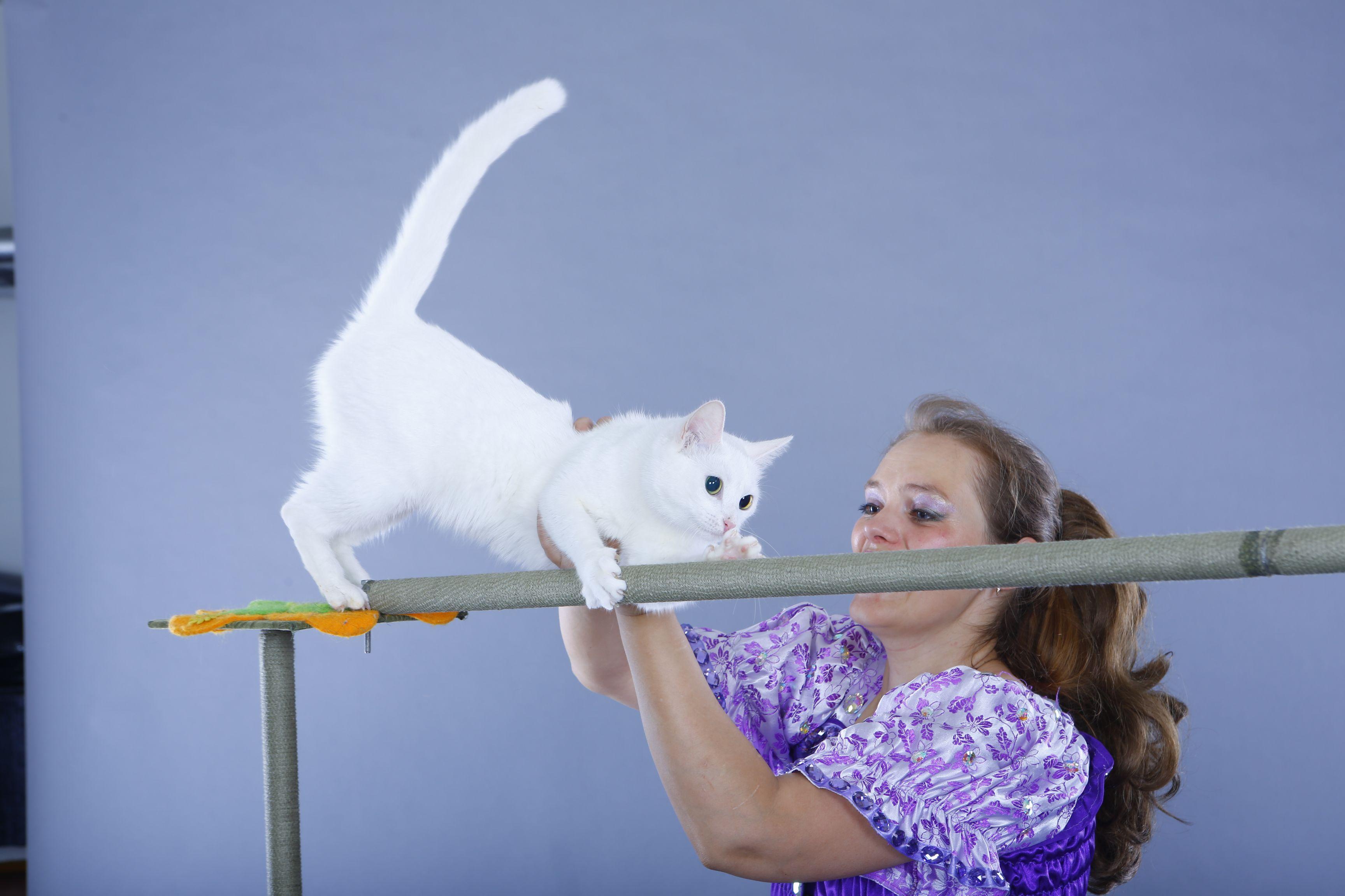 шоу кошек