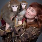 шоу цирковых обезьян
