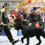 цирковая собака