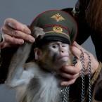шоу обезьян 100artistov.ru