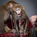 обезьянки