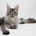 съемка кошек