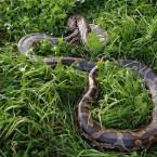 фотосессия со змеёй