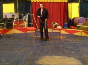 Шоу с животными 1
