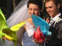 цветные голуби 3