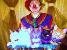 8 (985) 920 - 36 - 97 шоу кошек