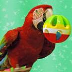 8(985) 920 – 36 – 97 Попугай шоу
