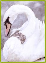 лебеди на свадьбу 1