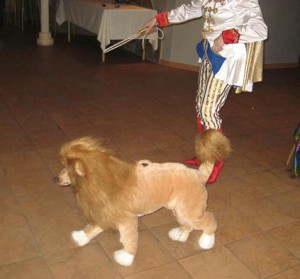 8 (985) 920 - 36- 97. Собака-лев