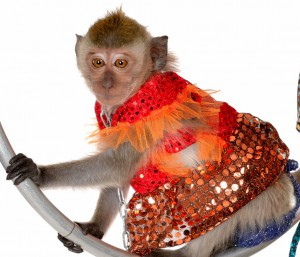 8 (985) 920 - 36- 97. Живая обезьянка