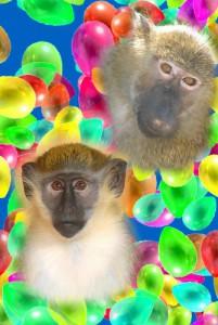 8 (985) 920 - 36- 97. Дрессированные обезьяны на день рождения8 (985) 920 - 36- 97. Дрессированные обезьяны на день рождения