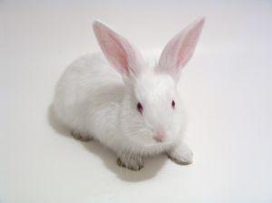 Фокус с кроликом и шляпой