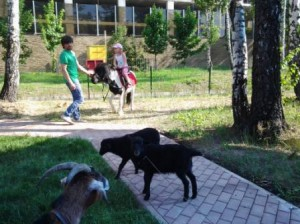 8 (985) 920 - 36- 97. Детская ферма с животными