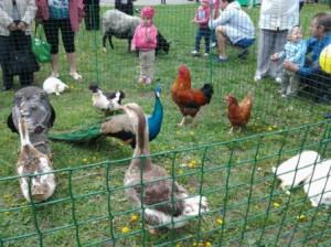 Ферма для детей 4