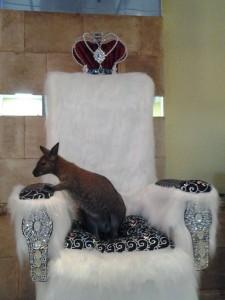 8(985)920-36-97. Королевский кенгуру на праздник.