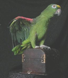 8(985)920-36-97. попугай с билетами счастья
