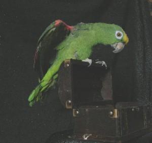 photo35