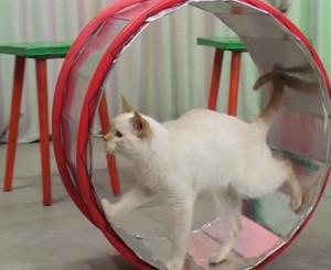 Цирковые представления с животными