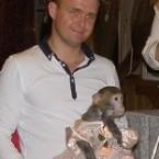обезьяна на праздник