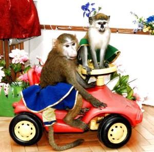 8 (985) 920 - 36- 97. День обезьян