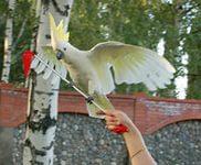 Шоу «Птица счастья» 3
