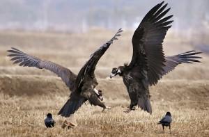 шоу хищных птиц