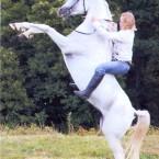 белая лошадь 1