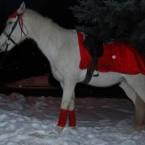 белая лошадь на свадьбу