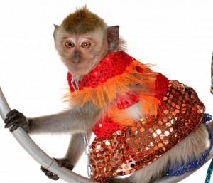 обезьянка на праздник