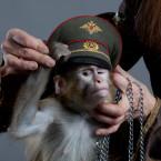 обезьянка 3